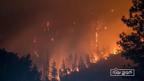 آتشسوزی در جنگل