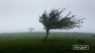 جهتیابی به کمک باد غالب یا باد بیشوز