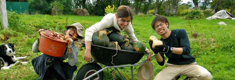 کار در مزرعه